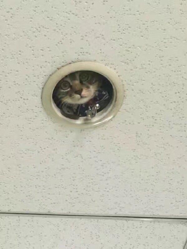 Nhìn mặt nó giống như một chiếc camera an ninh được sếp phái đến theo dõi nhân viên vậy.(Ảnh:omocha_no_uma)