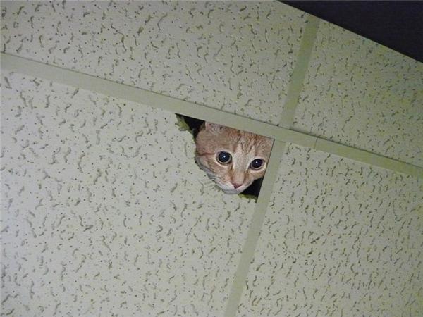 Mình mới thấy con chuột nó chạy ra đây mà, nó đâu rồi?
