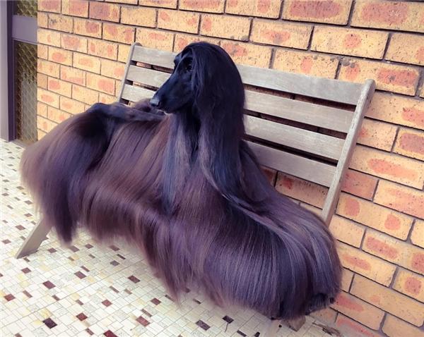 Bức ảnh đã giúp cô chó nổi danh khắp các mạng xã hội.