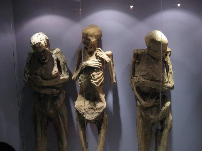 Cho đến nay, cả 111 xác ướp đều được trưng bày và bảo quản kĩ lưỡng tại Bảo tàng Xác ướp ở Guanajuato. (Ảnh: Viral Nova)