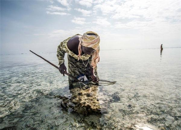Bạch tuộc là món đặc sản ngon nhất của đảo Tanzania.