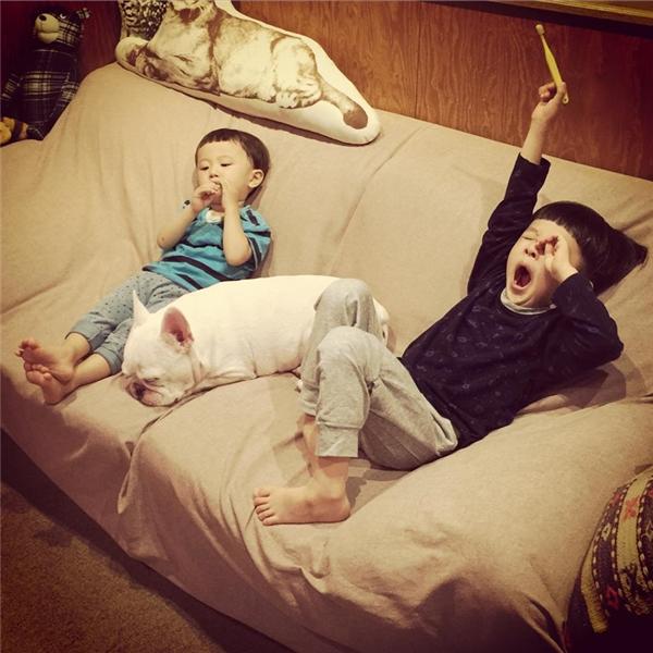 Với độ dễ thương vô đối của các chú nhóc này, hiện nay tài khoản Instagram của họ đã có hơn 590.000 người theo dõi.
