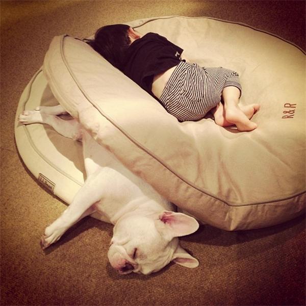 Tình bạn siêu dễ thương giữa nhóc tì đầu nấm và chó hạt mít