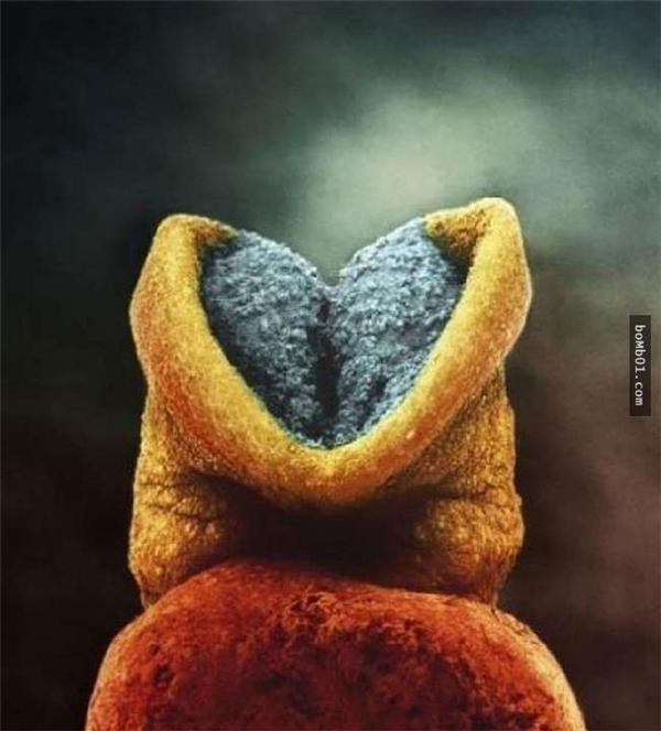 Để nghe được tim thai phải mất thêm 18 ngày chờ đợi.(Ảnh:Lennart Nilsson)