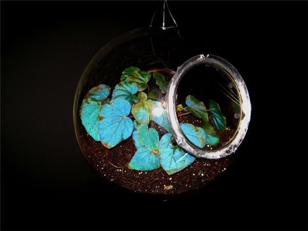 Khi tia sáng xanh dương rơi vào bề mặt lá, chúng sẽ bị phản xạ trở lại, cho nên nó là thứ ánh sáng duy nhất mắt người có thể nhìn thấy được, vì thế chúng ta thấy lá phát ra màu xanh dương.