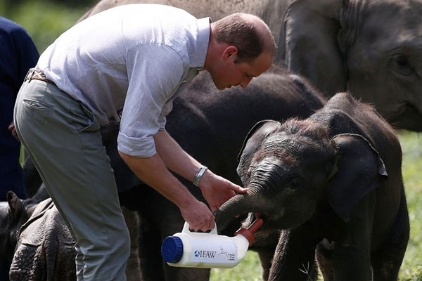 Hoàng tử William có chuyến viếng thăm chính thức Việt Nam
