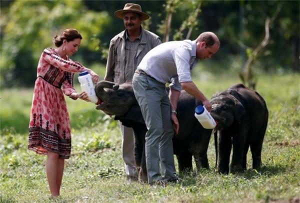 Bảo vệ động vật hoang dã là chủ đề chính củachuyến viếng thăm lần này của hoàng tử William.