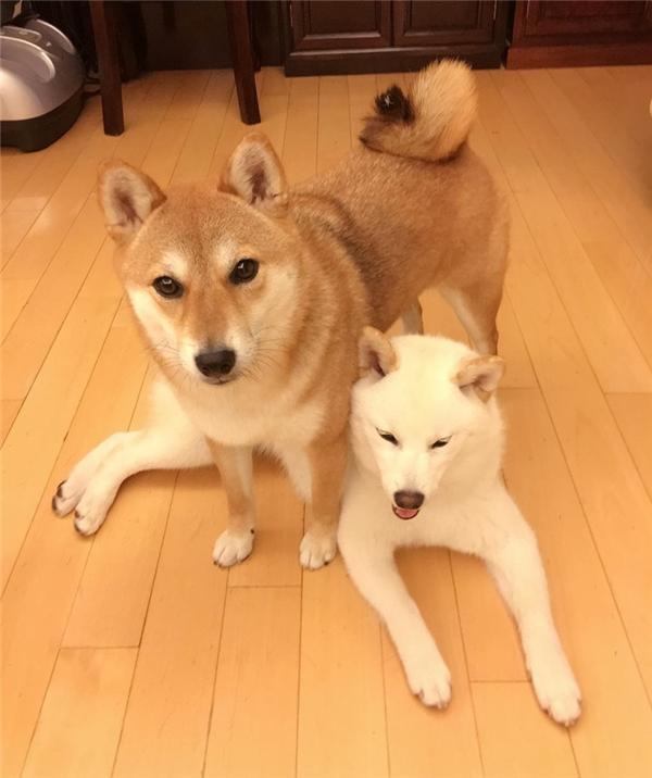 Kikko rất ra dáng chị cả, lúc nào cũng đứng ra bảo vệ các em út trong nhà.
