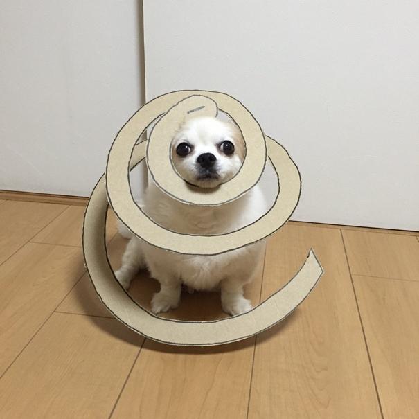 Với bộ ảnh này, chú chó trở nên nổi tiếng và được nhiều người yêu mến.