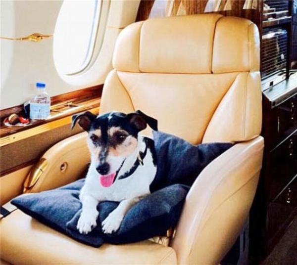 """Audrey được xem là """"fashionista chó"""" nổi tiếng."""