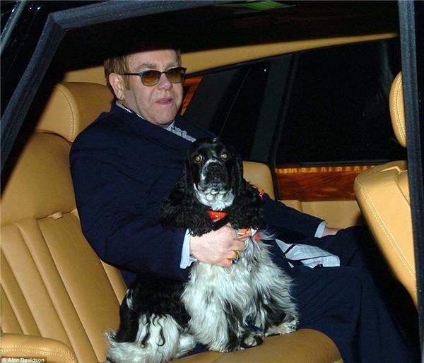 Arthur Dwight là chú chó mà danh ca Eton John được tặng trong dịp sinh nhật lần thứ 56 của mình.