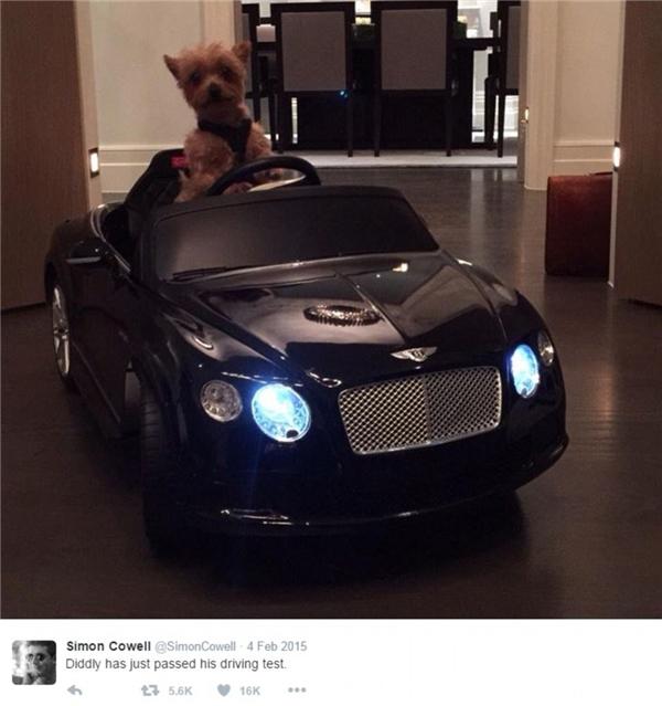 Simon Cowell yêu chú chó nhỏ đến mức mong muốn được nhân bản chúng.