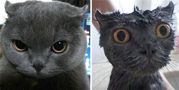 Hóa ra mèo có họ hàng xa với cú.