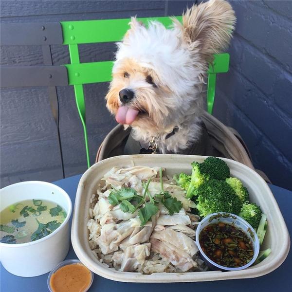 Chú chó này hiện đang tạo nên một cơn sốt hầm hập trên Instagram vì sở thích đi ăn nhà hàng và chụp ảnh tự sướng trước những đĩa thức ăn đầy ắp ai nhìn cũng phát thèm.