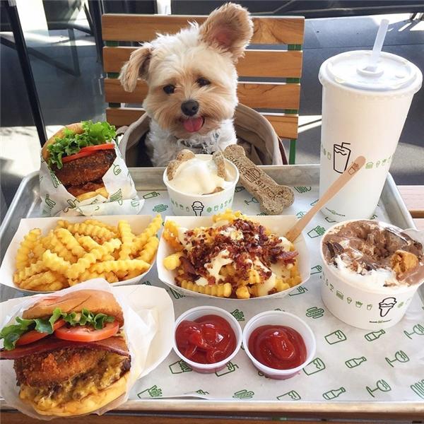Chỉ cần như thế, chú chó nhỏ đã trở nên nổi như cồn trên cộng đồng Instagram.