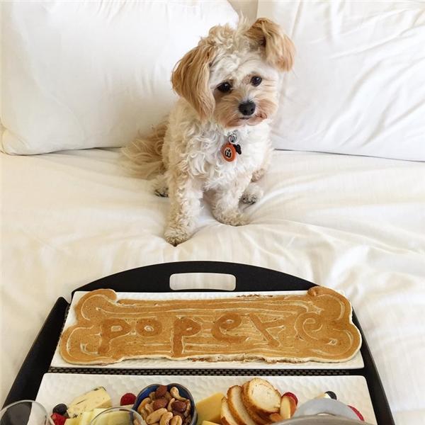 Popeye là một chú chó nhỏ, khoảng 3-4 tuổi, hiện đang sống với chủ của mình tại Los Angeles.