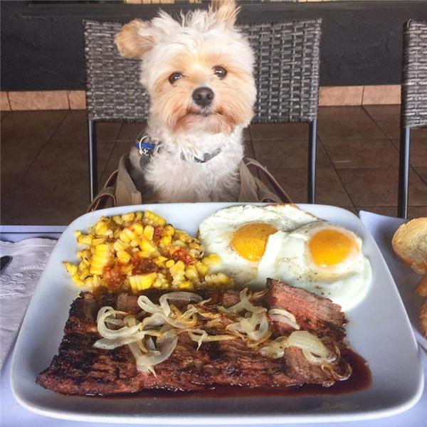 Phát hờn với cuộc sống ăn ngập mặt của chú chó từng một thời đói khát