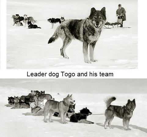 Thử thách đầu tiên mà đàn chó phải đối mặt chính là không để cái lạnh giết chết.