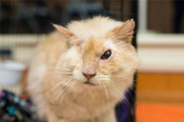 Xót xa chú mèo bị tạt axit dẫn đến mù loà và cái kết kì diệu