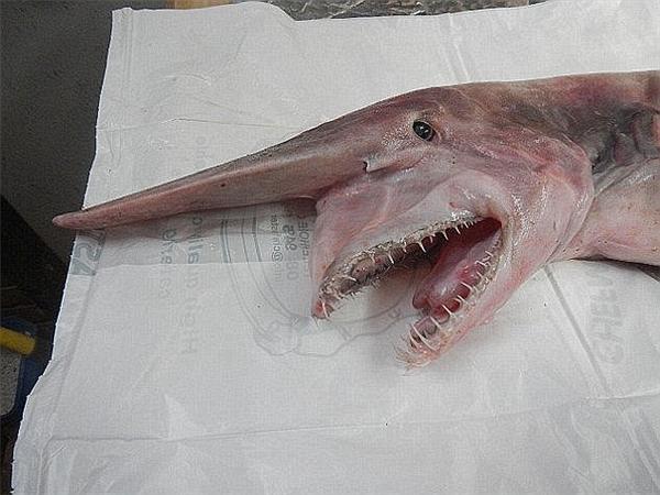 Phát hiện sinh vật biển bí ẩn có hình dạng như thủy quái tại Úc