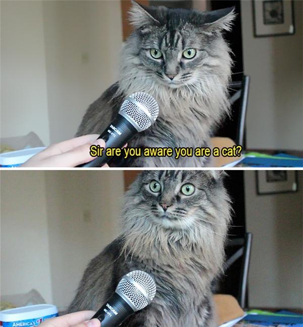 """""""Thưa ngài, ngài có nhận thức được rằng mình là mèo không?"""" Bỗng dưng... ngộ ra chân lý là đây.(Ảnh: Internet)"""
