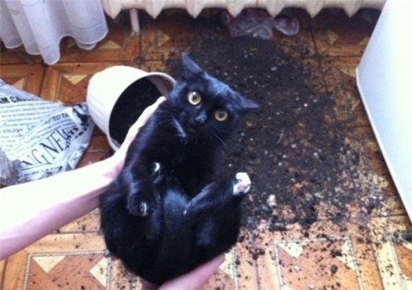 Vi diệu! Từ cái chậu đất trồng lên được cái... củ mèo này!(Ảnh: Internet)