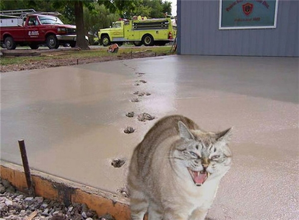Cô mèo hùng hổ tỏ vẻ đại ca nhưng thật ra vừa gây họa. (Ảnh: Internet)