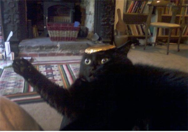 """""""Nón sắt này vừa vặn với em không?"""" (Ảnh: Internet)"""