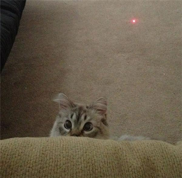 """Đôi mắt ngây thơ vô số tội. Hãy cẩn thận vì không chừng """"ẻm"""" vừa gây ra chuyện tày trời gì rồi. (Ảnh: Internet)"""