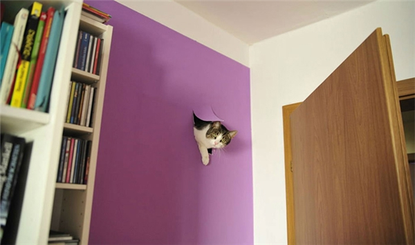 Cuối cùng bà mèo cũng tìm ra chỗ lí tưởng cho mình, nhưng thật bất hạnh cho chủ. (Ảnh: Internet)