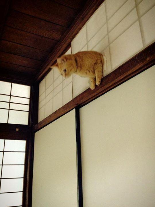 Cao thế này thì làm sao mà nhảy xuống đây.