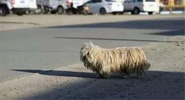Chú chó cứ đi quanh quẩn khu vực này tìm kiếm và chờ đợi.(Ảnh: Internet)