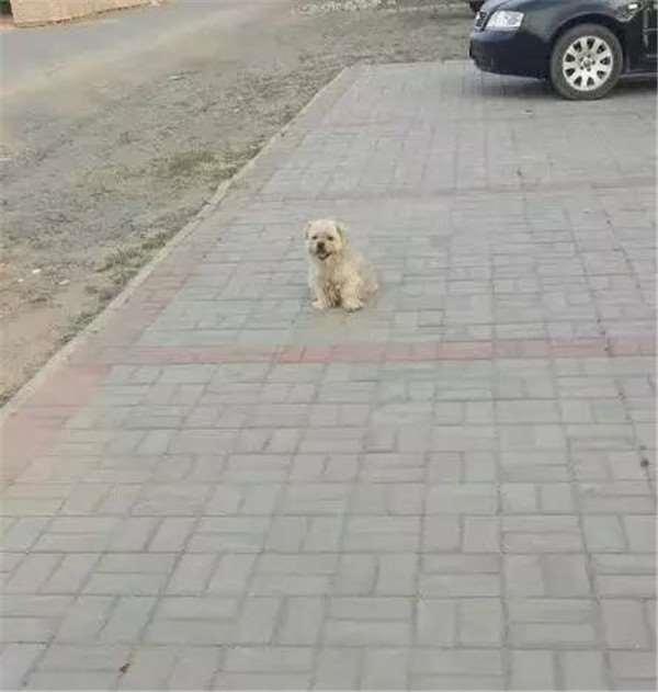 Những người tốt bụng đã nhận nuôi, nhưng chú chó không chịu ở với ai.(Ảnh: Internet)