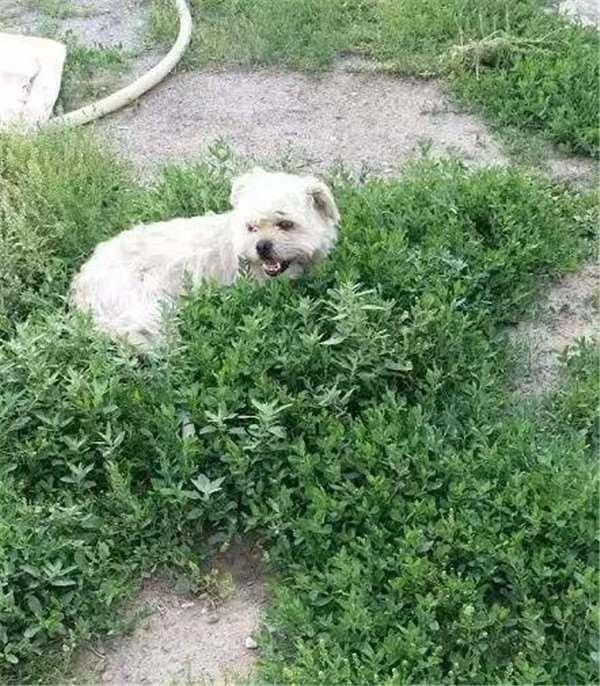Trái tim đóng băng lâu này của chú chó đã tan chảy trước tình yêu thương của người chủ mới. (Ảnh: Internet)