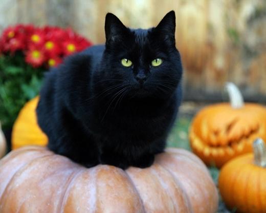 Halloween và những điều kiêng kị không phải ai cũng biết