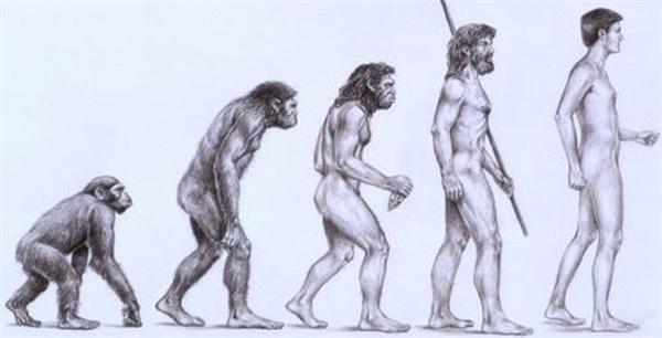 Loài người là hậu duệ tiến hóa từ loài vượn. (Ảnh: internet)