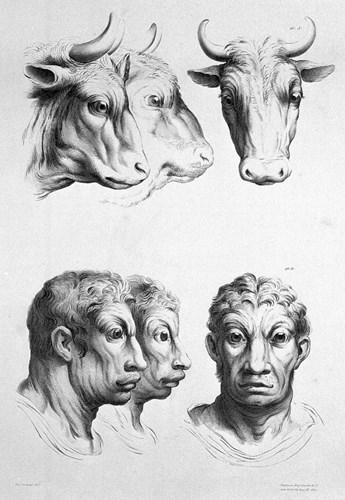 Tiến hóa từ bò. (Ảnh: Brightside)