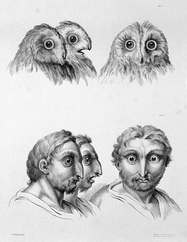Tiến hóa từ chim cú. (Ảnh: Brightside)