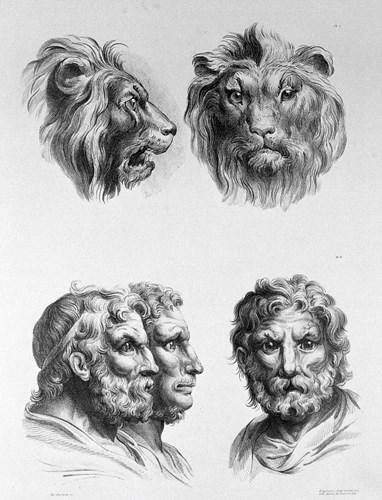 Tiến hóa từ sư tử. (Ảnh: Brightside)