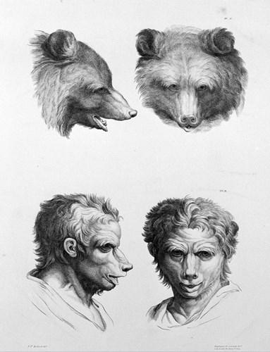 Tiến hóa từ gấu. (Ảnh: Brightside)