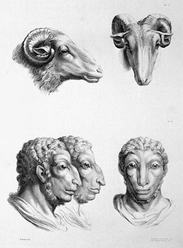 Tiến hóa từ cừu. (Ảnh: Brightside)