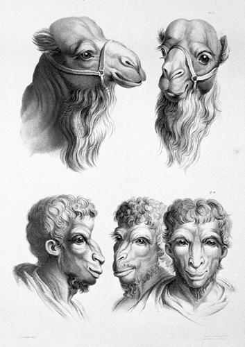 Tiến hóa từ lạc đà. (Ảnh: Brightside)