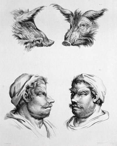 Tiến hóa từ lợn lòi. (Ảnh: Brightside)