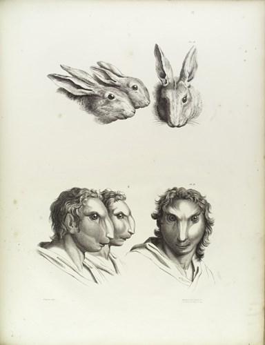 Tiến hóa từ thỏ. (Ảnh: Brightside)