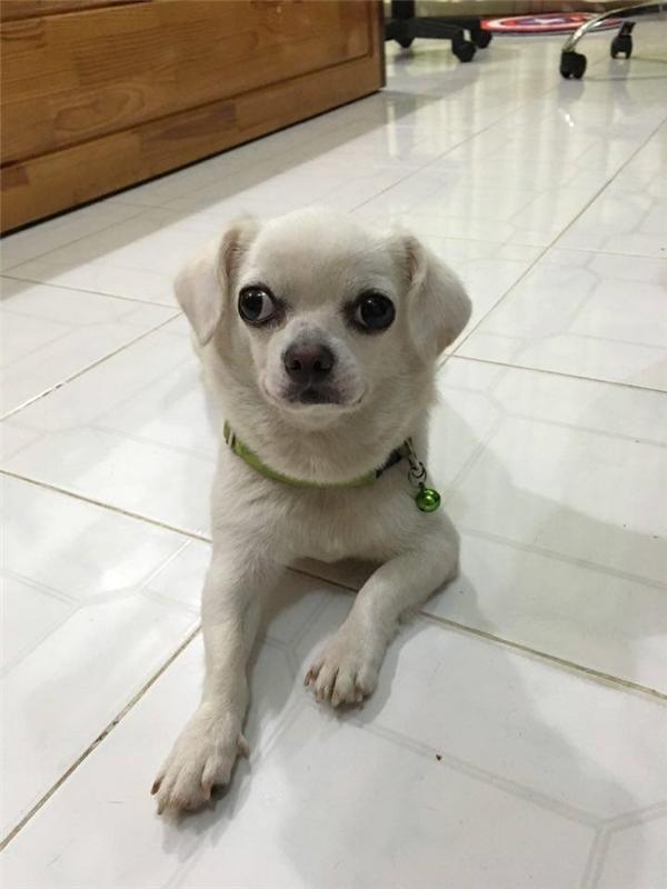 Càng ngắm càng yêu cô chó có đôi mắt... con này dỗi con kia