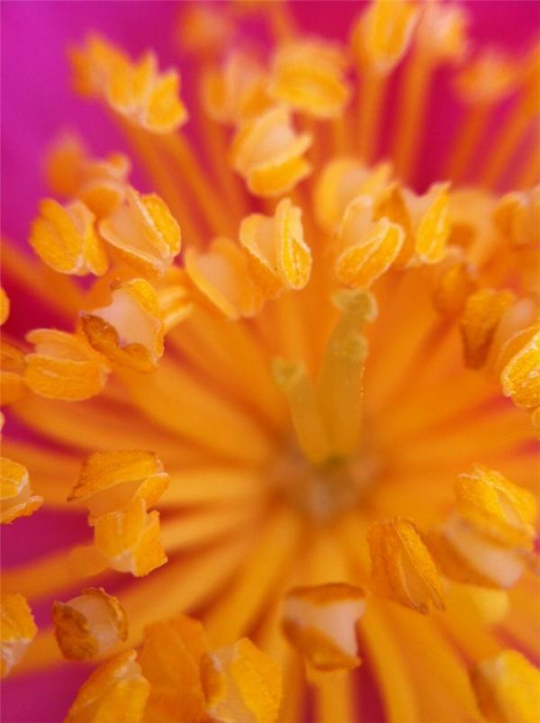Thật không ngờ bên trong nhụy hoa lại ảo diệu đến thế.