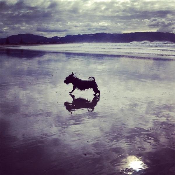 Trời trong, biển xanh, thênh thang đường chó bước.