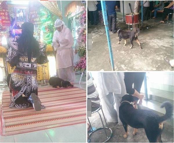 Chú chó đeo khăn tang, quanh quẩn bên quan tài chủ. (Ảnh: Beatvn)