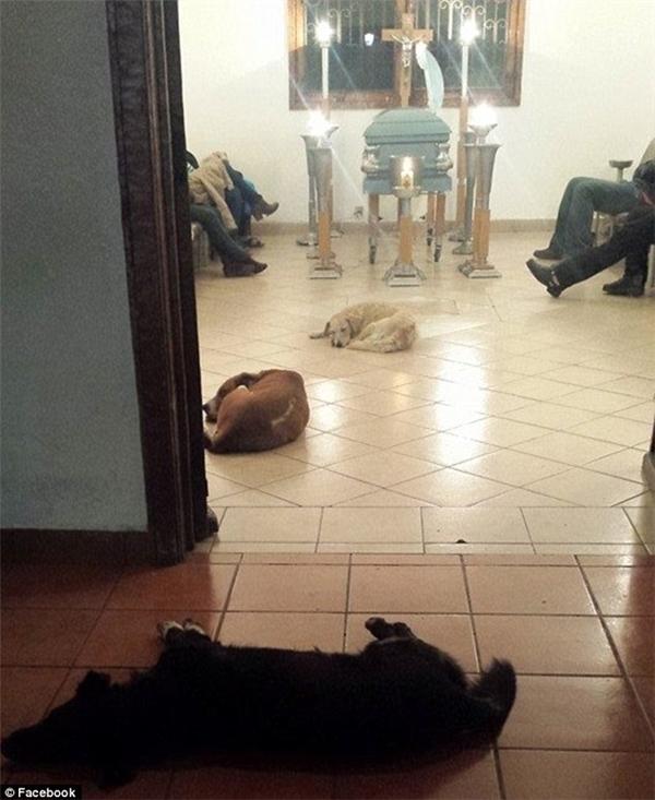 Bầy chó hoang kéo đến và ngoan ngoãn nằm cạnh quan tài của bà Margarita.(Ảnh: Facebook)