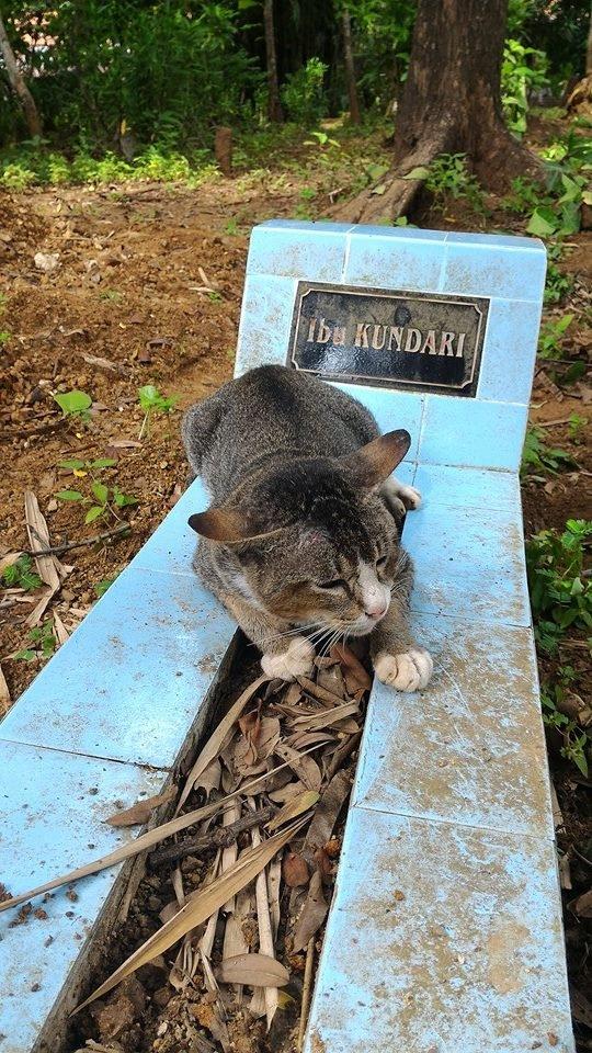 Chú mèo không rời nơi chôn người chủ quá cố và túc trực ở đógần một năm nay.